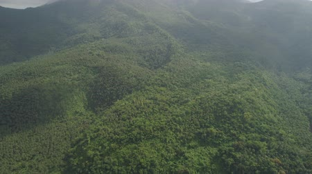 bitkiler : Aerial view of mountains covered forest, trees in cloudy weather, Bulusan Volcano. Luzon, Philippines. Slopes of mountains with evergreen vegetation. Mountainous tropical landscape.