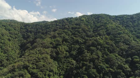luzon : Aerial view of mountains covered with green forest, trees with blue sky. Slopes of mountains with tropical forest. Philippines, ,Luzon. Tropical landscape in Asia. Stock Footage