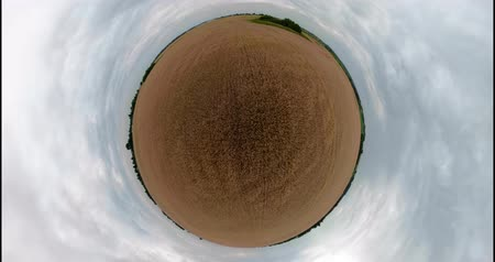 árpa : Field with yellow wheat on summer day spherical little planet view panorama 360VR. Spikelets of ripening yellow wheat on farm land.
