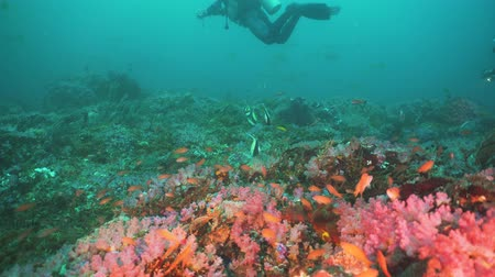 deep sea exploration : Scuba divers explores underwater coral reef and watching the fish.Scuba diver underwater in a tropical sea.Tropical fish on a coral reef. Diving and snorkeling in the tropical sea. Philippines, Mindoro.