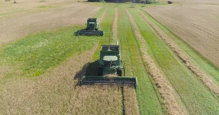 コンバイン : Combine harvester at work harvesting field wheat. Aerial view Combine harvester mows ripe spikelets, barley, rye. 動画素材