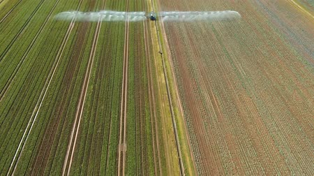 çiftçilik : Aerial view: Irrigation equipment watering cabbage field. Irrigation system watering farm field, 4K, aerial footage. Stok Video