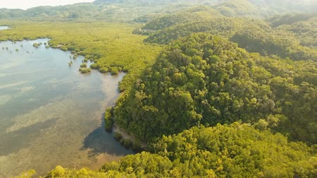 mangrovia : aerial footage mangrove tree forest and river Mangrove jungles, trees, river. Mangrove landscape. Philippines. Filmati Stock