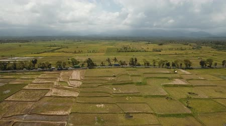 flying video : Aerial view: rice plantation,terrace, agricultural land of farmers on the island Bali. 4K Aerial footage.