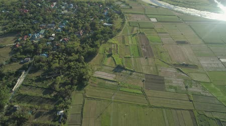 luzon : Aerial view of rice plantation,terrace, agricultural land of farmers. Tropical landscape with farmlands on island Luzon, Philippines. Stock Footage