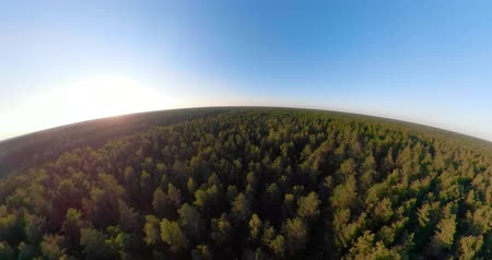 küresel : Green forest, treetops, forest area spherical little planet view. Pine, spruce forest from above. Flight over mixed forest on a sunny summer day VR Stok Video