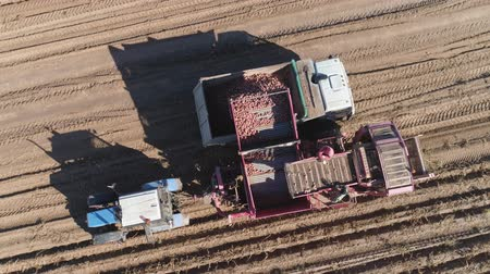 kırsal : aerial potatoes are dug bycombine and gently lifted up and placed in truck. potatoes harvesting machine with tractor in farm land for harvesting potatoes. Farm machinery harvesting potatoes.