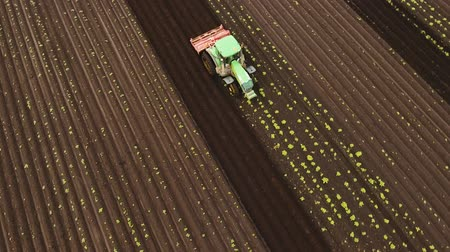 tırmık : Aerial view Tractor Hilling Potatoes with disc hiller. Farmer in tractor preparing land with seedbed cultivator in farmlands. Tractor plows a field. Agricultural work in processing, cultivation of land. Farmers preparing land and fertilizing. Agricultural Stok Video