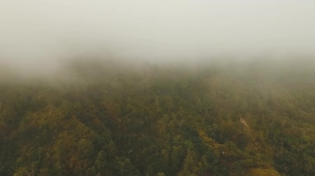 enevoado : Forest in the mountains of tropical island in the clouds. Aerial view of over tropical rainforest in mountains with white fog, clouds, Bali,Indonesia. Fog over the jungle. Aerial footage.