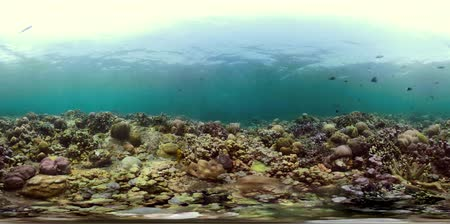snorkeling : coral reef and tropical fish. vr360 underwater world with corals and lot fish. Hard and soft corals underwater landscape