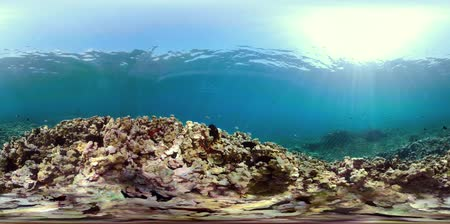 šnorchl : coral reef and tropical fish. vr360 underwater world with corals and lot fish. Hard and soft corals underwater landscape
