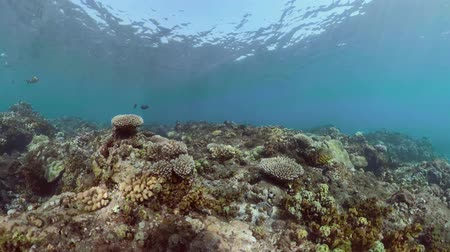 vízi : tropical fish and coral reef. underwater world diving and snorkeling on coral reef. Hard and soft corals underwater landscape
