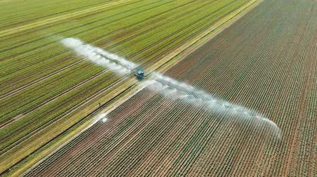 cultivar : Aerial view: Irrigation equipment watering cabbage field. Irrigation system watering farm field, 4K, aerial footage. Vídeos