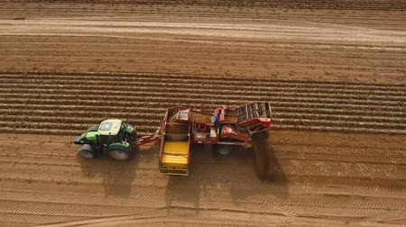 combinar : Farm machinery harvesting potatoes. Farmer field with a potato crop. 4K, aerial footage.