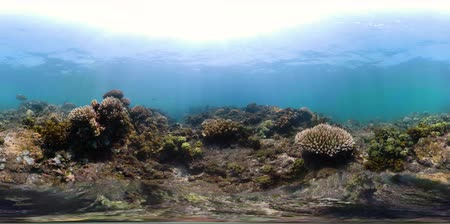 şnorkel : vr360 fish and coral reef at diving. underwater world with coral reef, tropical fish. Hard and soft corals. Indonesia Stok Video