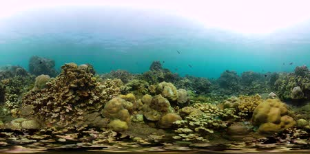 šnorchl : vr360 tropical fish on coral reef at diving. underwater world with coral reef, tropical fish. Hard and soft corals. Indonesia