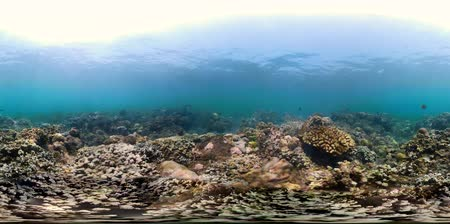 derinlik : vr360 fish and coral reef at diving. underwater world with coral reef, tropical fish. Hard and soft corals. Indonesia Stok Video