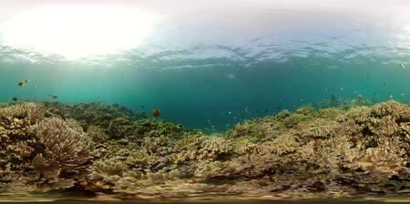 šnorchl : vr360 coral reef and tropical fish. underwater world with corals and lot fish. Hard and soft corals underwater landscape