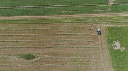 Aerial, view agricultural machinery with wheeled rake makes ranks beveled hay.Tractor which is lining up dried grass getting it ready for pickup so it can be used as animal fodder summer day. Vídeos