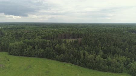 Aerial view green forest, treetops, forest area. Pine, spruce forest from above. Flight over mixed forest on a sunny summer day