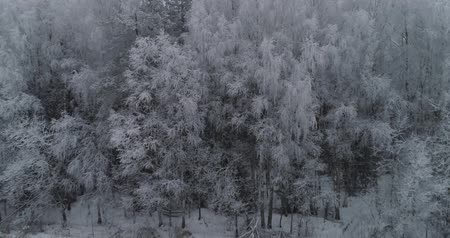 крытый : Aerial view: Winter landscape countryside with snow, forest, field. Feld, forest, trees covered with frost snow, Aerial footage. Winter country landscape