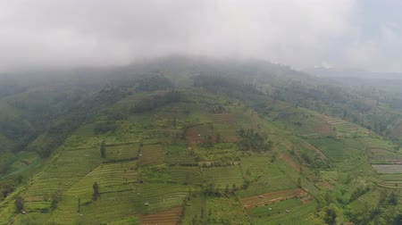 java : agricultural land in mountains fog and clouds, fields with crops, trees. Aerial view farmlands on mountainside Java, Indonesia. tropical landscape Stock Footage
