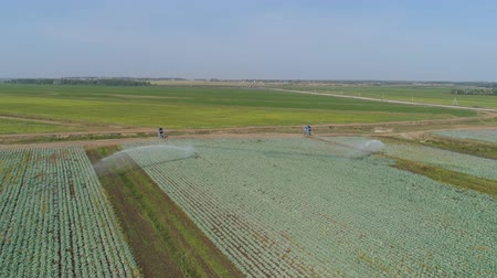 spil : aerial footage crop Irrigation using center pivot sprinkler system. An irrigation pivot watering agricultural land. Irrigation system watering farm land. Stockvideo