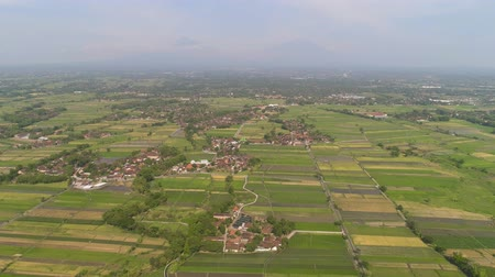 java : agricultural landscape in asia with rice fields, farmers village agricultural land with sown green in countryside. farmland with agricultural crops in rural areas Java Indonesia. Land with grown plants of paddy Aerial footage.