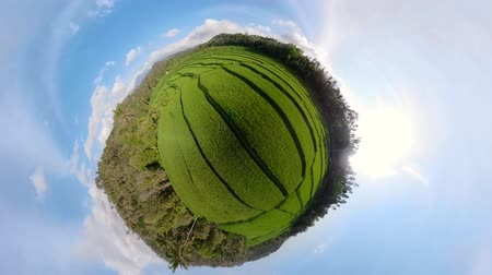 küresel : little planet view rice fields in the countryside. aerial view rice terrace, agricultural land Aerial footage.