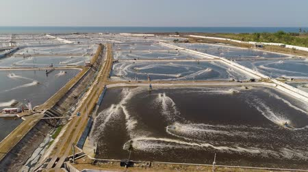 prawns : shrimp farm, prawn farming with with aerator pump oxygenation water near ocean. aerial view fish farm with ponds growing fish and shrimp and other seafood. Fish hatchery pond aerial view aquaculture business exported international market. java, indonesia Stock Footage