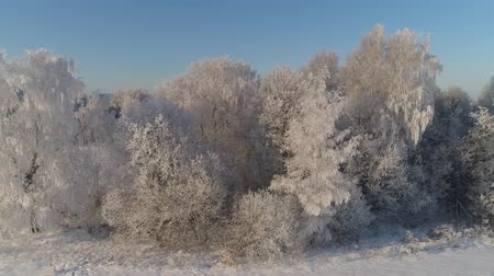 иней : aerial view winter landscape trees covered with snow in countryside. winter forest on sunny day.