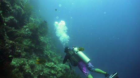 mergulhador : Scuba diver explores underwater coral reef and watching fish.Scuba diver underwater in tropical sea.Tropical fish on coral reef. Diving and snorkeling in tropical sea. Vídeos