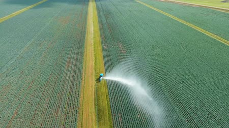 irrigation system : Aerial view: Irrigation equipment watering cabbage field. Irrigation system watering farm field, 4K, aerial footage. Stock Footage
