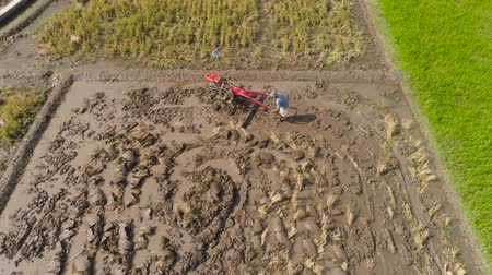 tiller : farmer working in rice plantation using tiller tractor. aerial view paddy farmer prepares the land planting rice. farmland with agricultural crops in rural areas Java Indonesia Stock Footage