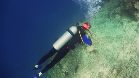 outdoor hobby : Scuba diver explores underwater coral reef and watching fish.Scuba diver underwater in tropical sea.Tropical fish on coral reef. Diving and snorkeling in tropical sea. Stock Footage