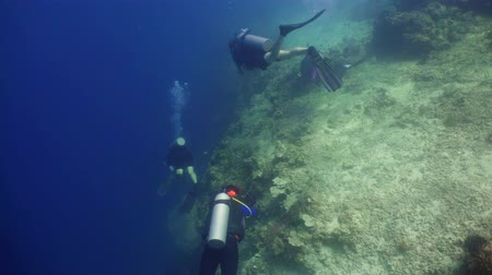 palmes : Scuba divers explores underwater coral reef and watching fish.Scuba diver underwater in tropical sea.Tropical fish on coral reef. Diving and snorkeling in tropical sea.