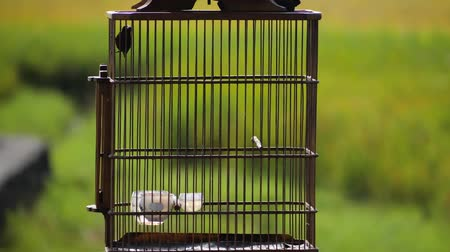 hummingbird : hummingbird in a cage outside against green foliage