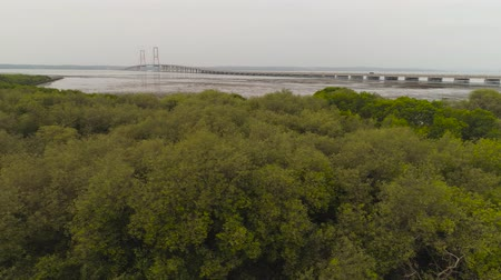 asma : aerial view mangroves and suspension cable bridge Suramadu over madura strait connecting islands Java and Madura. surabaya high coast bridge with highway. java, indonesia