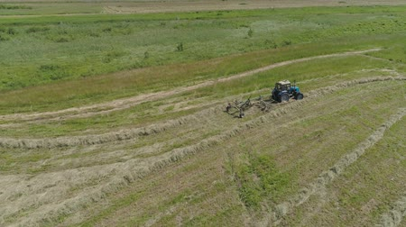 ピックアップ : Aerial, view agricultural machinery with wheeled rake makes ranks beveled hay.Tractor which is lining up dried grass getting it ready for pickup so it can be used as animal fodder summer day. 動画素材