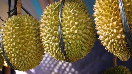 mal cheiroso : Durian fruit for sale in market Stock Footage