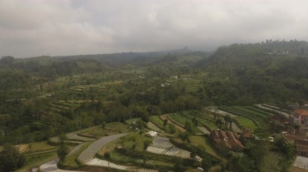 terrazas : agricultural land in mountains rice terraces, fields with crops, trees. Aerial view farmlands on mountainside Java, Indonesia. tropical landscape Archivo de Video