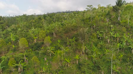 avuç içi : tropical forest on mountain slopes. aerial view rainforest in Indonesia. tropical forest with green, lush vegetation. aerial footage Stok Video