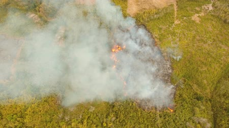 bush fire : forest fire on slopes hills and mountains, bush. Forest and tropical jungle deforestation for human food farming and export. large flames from forest fire. Using fire to destroy natural habitat and causing large scale environmental damage in Asia. Coron,  Stock Footage