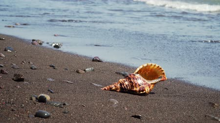 muszla : sea shell on sandy beach against sea surf. shell horn on coast seascape