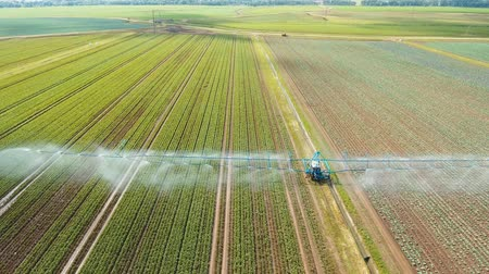 termés : Aerial view: Irrigation equipment watering cabbage field. Irrigation system watering farm field, 4K, aerial footage. Stock mozgókép