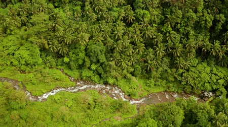 mindanao : River in the rainforest through the green jungle covered with green forest and palm trees aerial view. River in the green forest. Camiguin, Philippines.