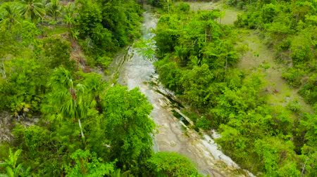 cebu : Mountain river in the rainforest through the green jungle covered with green forest and palm trees top view. River in the green forest. Cebu, Philippines.