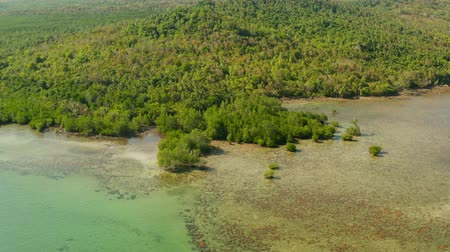 palawan : Coastline of tropical island Balabac covered with green rain forest and mangrove trees, aerial view. Palawan, Philippines Stock Footage