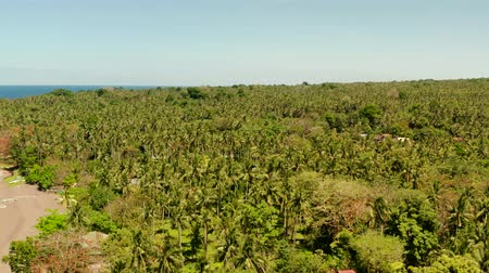 mindanao : Coconut palms near the beach and the blue sea, above view. Beach with fishing boats and palm trees, tropical landscape Stock Footage