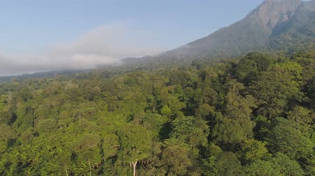 dağlık : aerial view tropical forest with lush vegetation and mountains, java island. tropical landscape, rainforest in mountainous area Indonesia. green, lush vegetation. aerial footage Stok Video